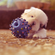 Best Toys For A New Puppy