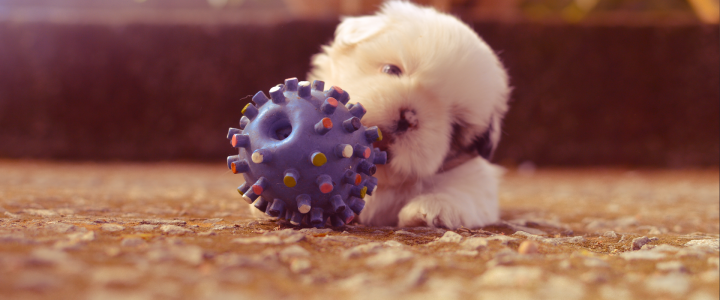 Best toys for new puppy