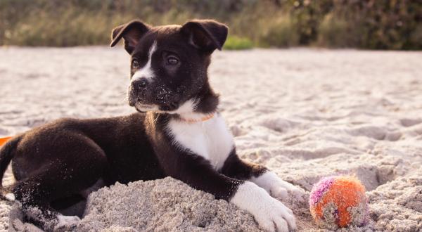 Puppy supply list