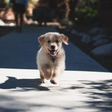 The Best New Puppy List You Need For Getting Started