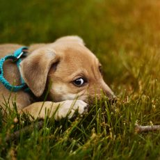 What to do when you first get a new puppy