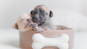 best bedding for puppies