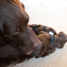 Benefits Of Puppy Pads And Choosing The Right One