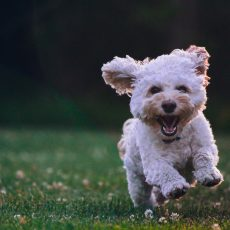 The Benefits Of Use A Puppy Grass Pad At Your Home