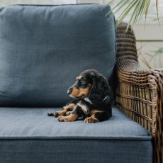 How To Do Puppy Socialization While Social Distancing