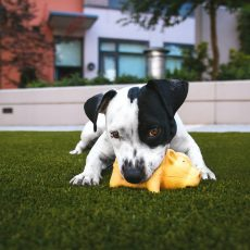 The Best Puppy Toys For Your New Puppy