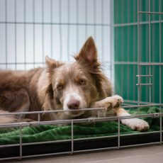 Is A Dog Crate Important For Training Your Puppy At Home